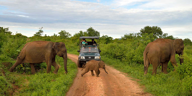14 Best Things To Do In Colombo | Udawalawe National Park