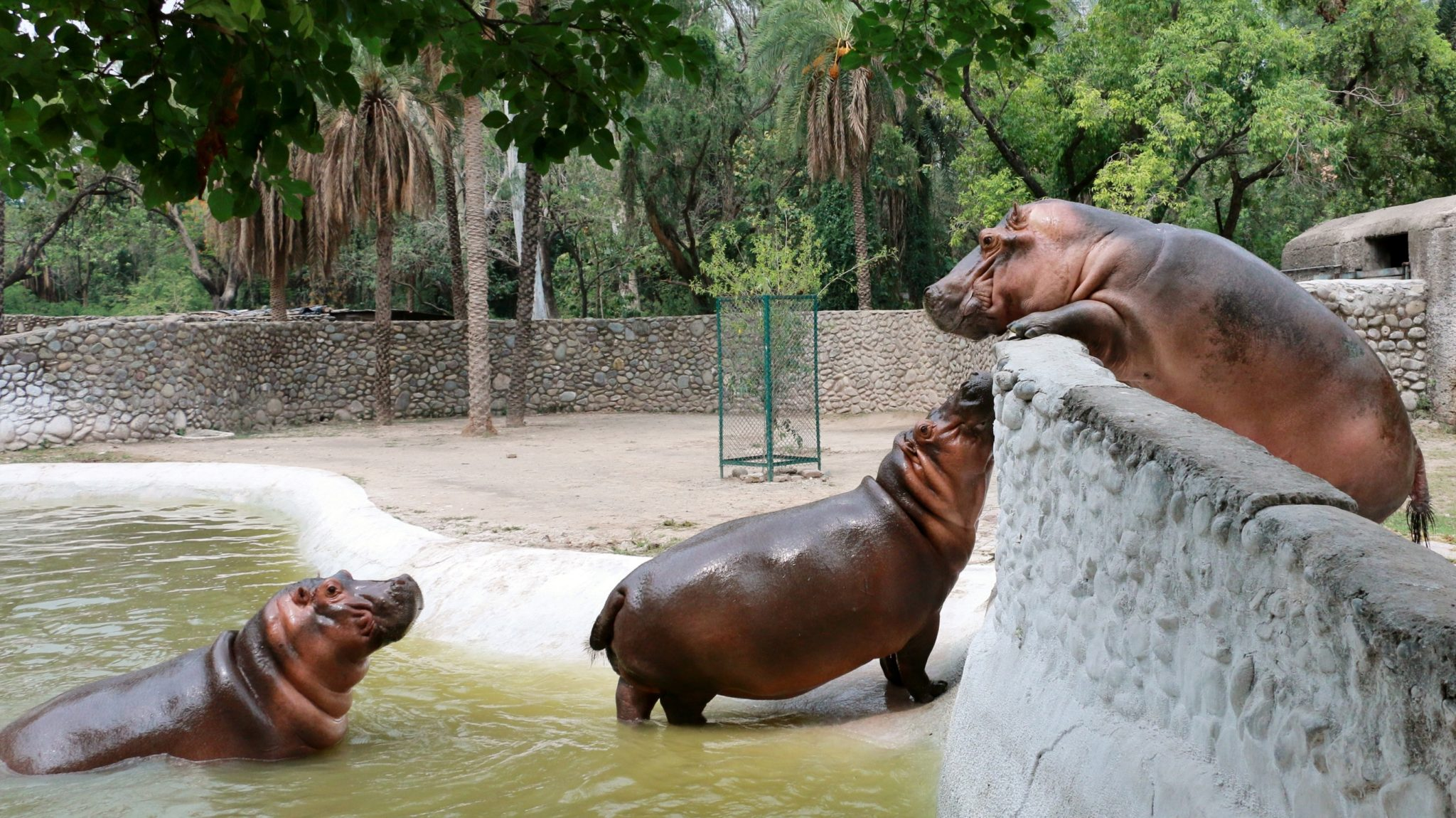 10 Best Places To Visit In Chandigarh, India / Chhatbir Zoo