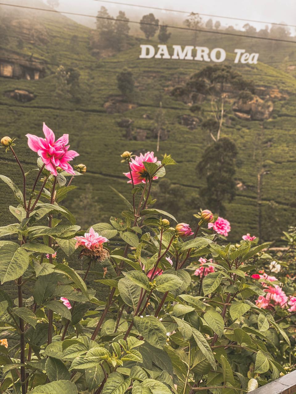 Damro Tea
