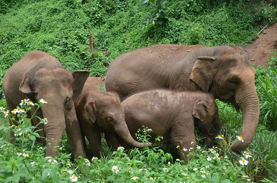 Elephant Nature Park / 13 Best Things To Do In Chiang Mai, Thailand