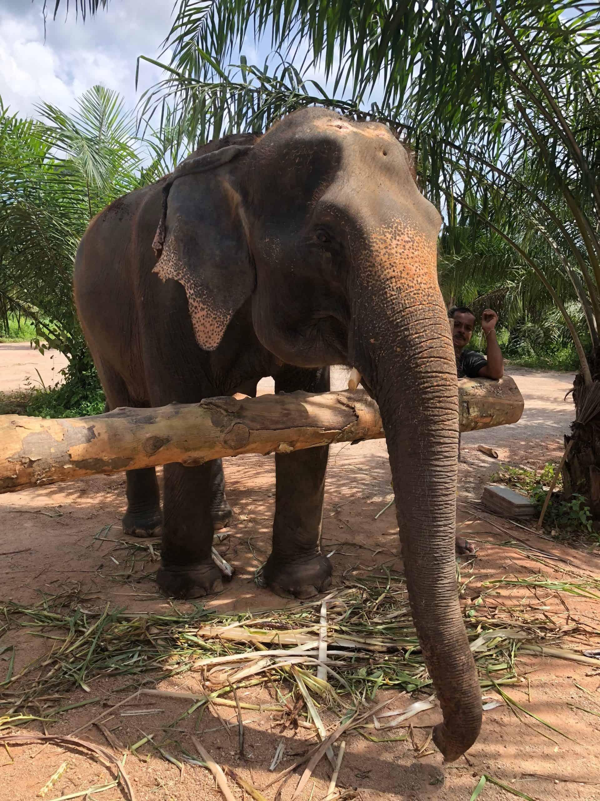 Best Things To Do In Krabi / Krabi Elephant Sanctuary
