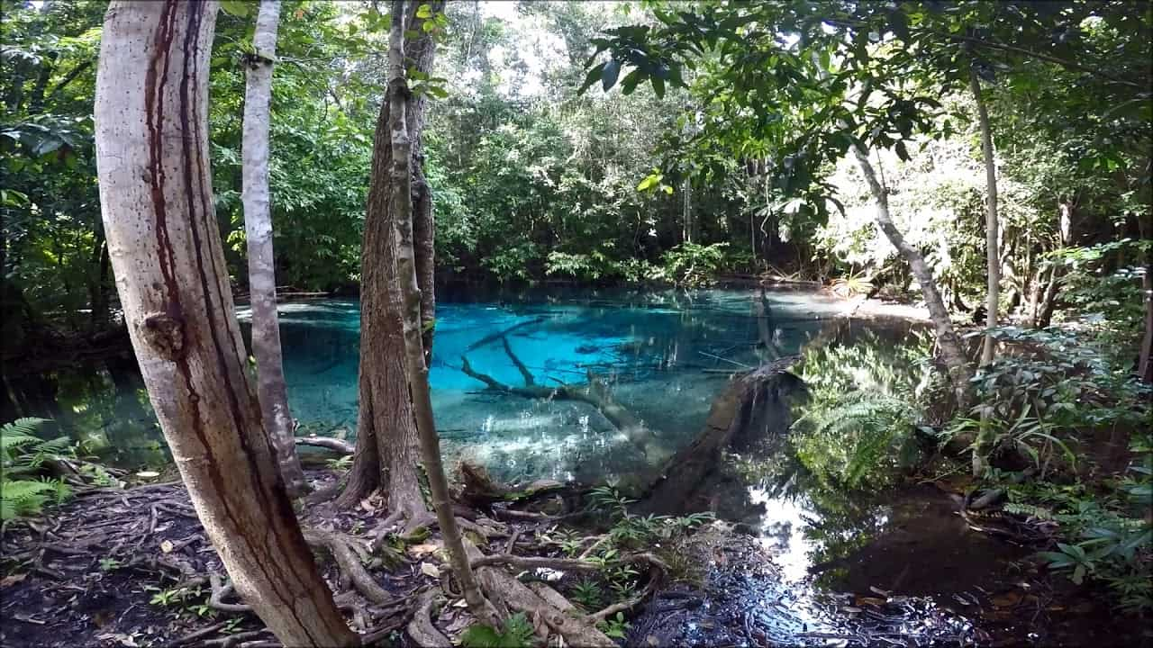 Best Things To Do In Krabi / Thung Teao Forest Natural Park