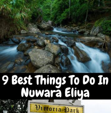 Best Things To Do In Nuwara Eliya