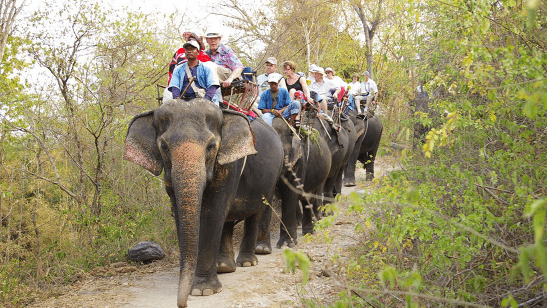 Hutsadin Elephant Foundation / Best Things To Do In Hua Hin