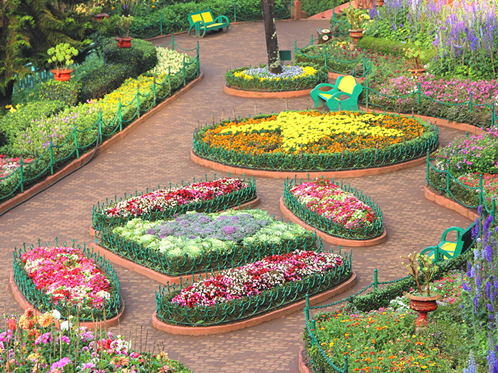 Botanical Garden Ooty / Best Places To Visit In Ooty