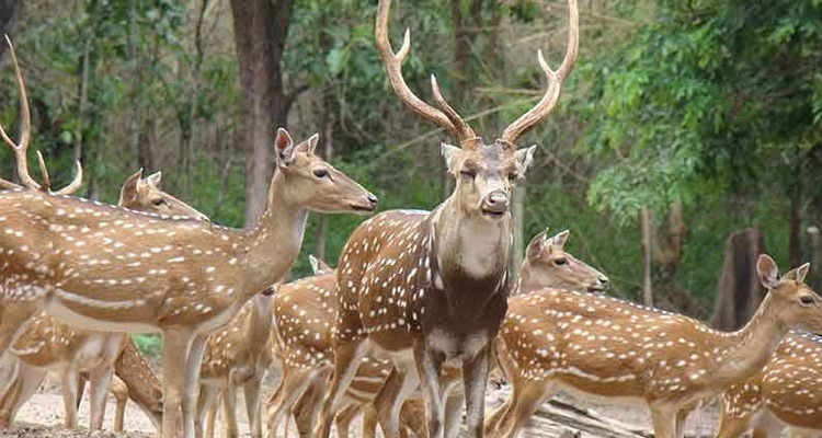 Deer Park Ooty / Famous Places To Visit In Ooty