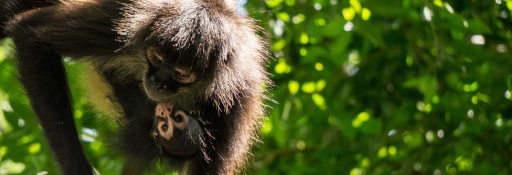 Croco Cun Zoo / Things To Do In Riviera Maya